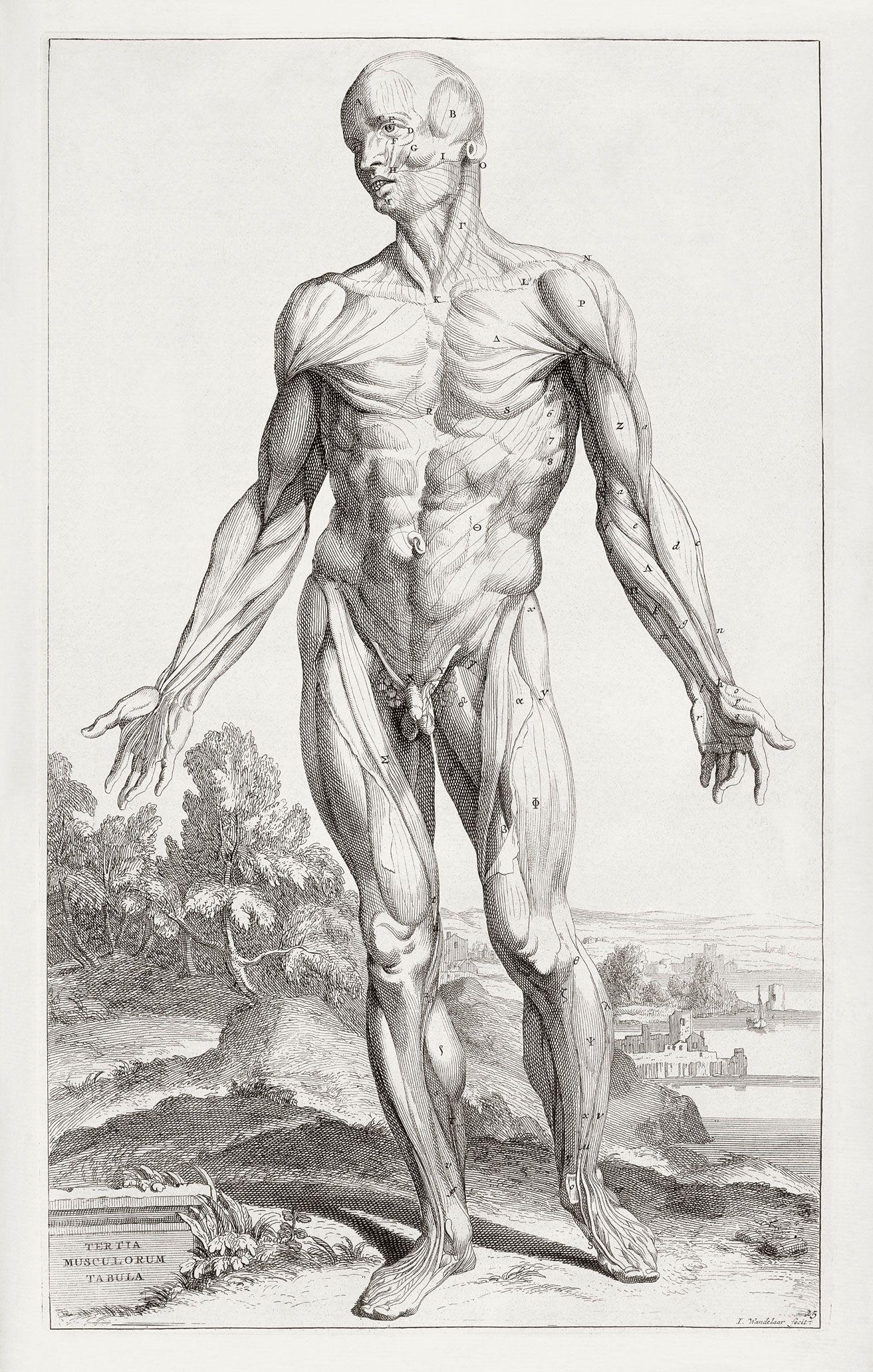 Detailed Anatomy drawing | anatomy | Pinterest | Anatomy and Anatomy ...