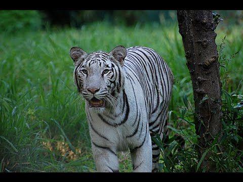 ce0e4b167613748efd2dd7b6000b80c4 - Mysore Zoo Sri Chamarajendra Zoological Gardens