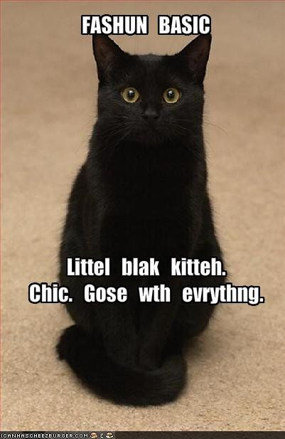 little black kitten goes with everything
