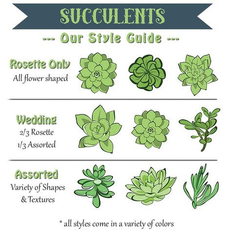 2 wedding succulents plants gardens and flowers for Different types of succulent plants