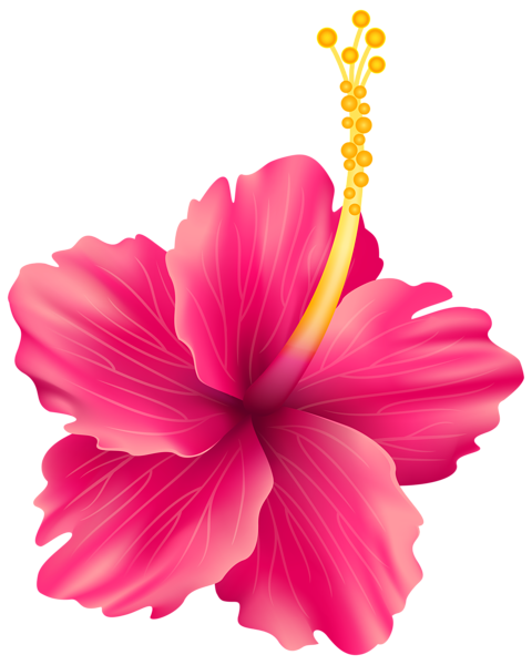 Pink Flower Flowers Pinterest Exotic Flowers Art