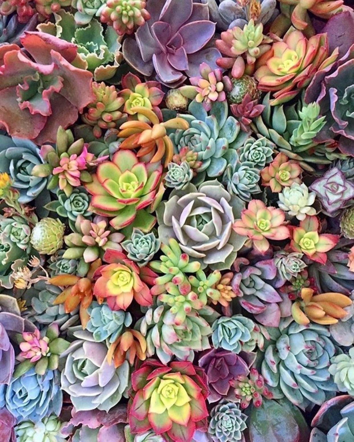 Epingle Par Claire Guys Sur Plant S Avec Images Photographie