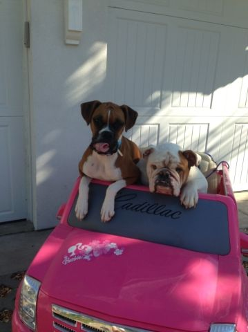 Doggies in front of the garage door... in a car :)