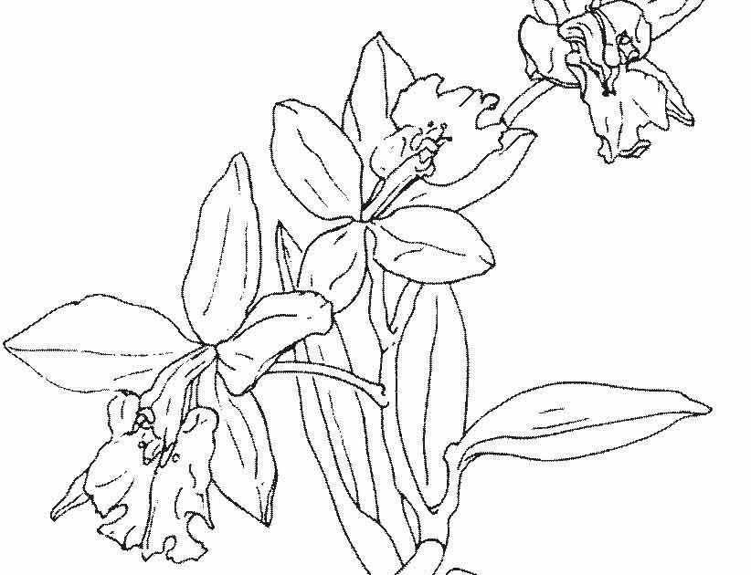 Menakjubkan 12 Gambar Ragam Hias Flora Bunga Tulip Di 2020