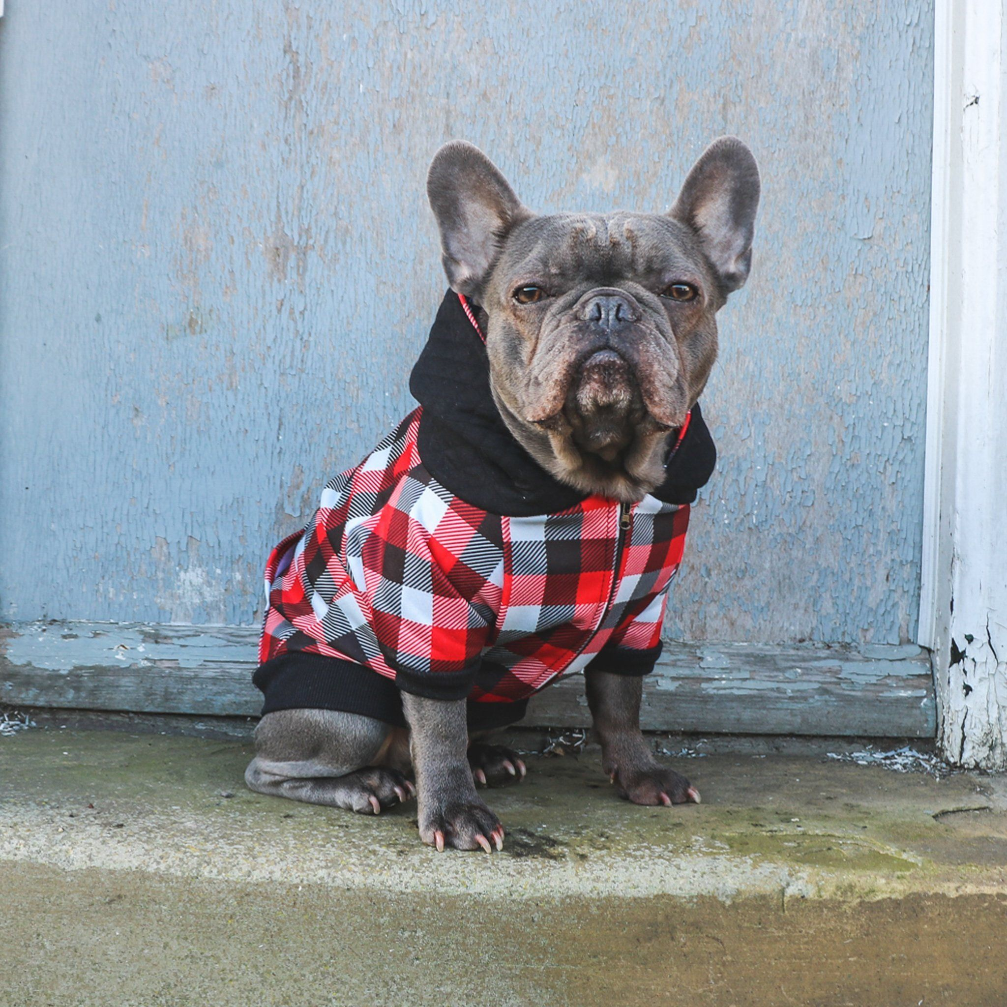 Frenchie Dog Hoodie Red Flannel Dog hoodie, Dogs