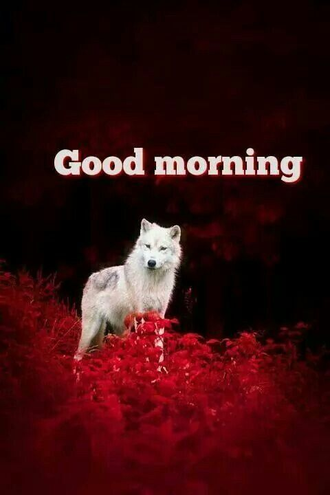 Good Morning Good Morning Quotes Good Morning My Friend Good Morning Animals
