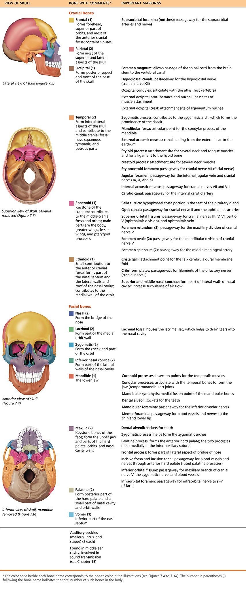 hight resolution of part 1 the axial skeleton 7 1 the skull consists of 8 cranial bones and 14 facial bones human anatomy and physiology