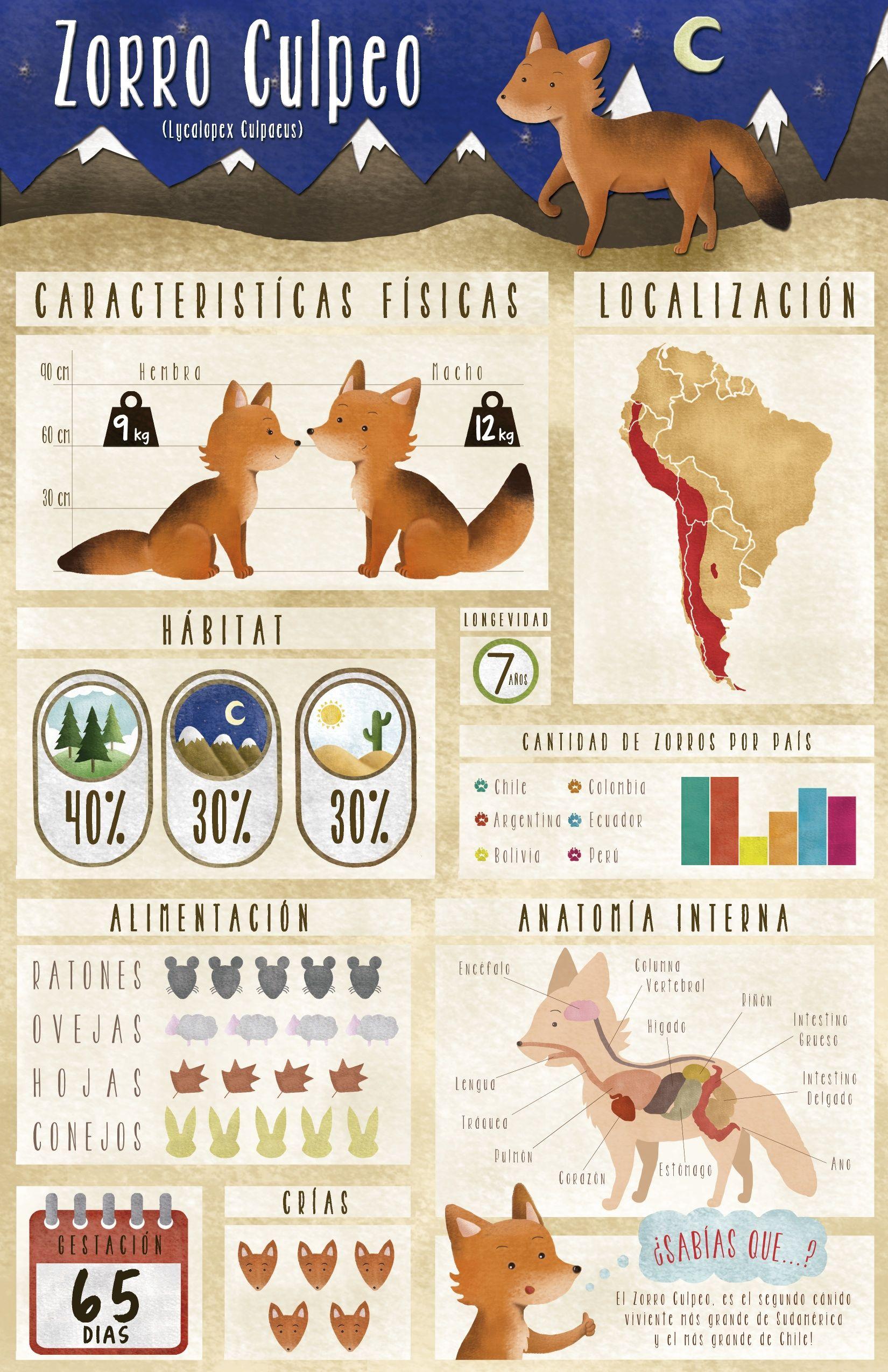 Infografia Zorro Culpeo By Vale Wilson Www Behance Net