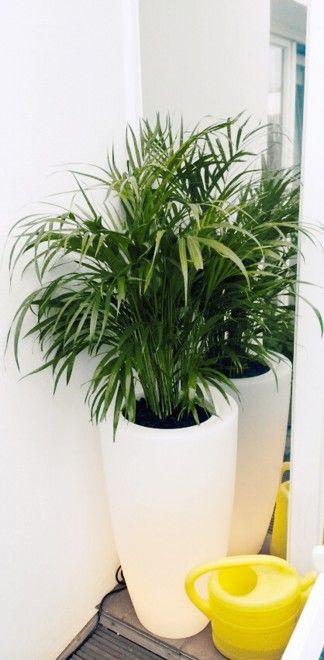 Pure Soft Round High Led Light Elho Design Plants Pot Greenery Trend Elhofeeling Garden