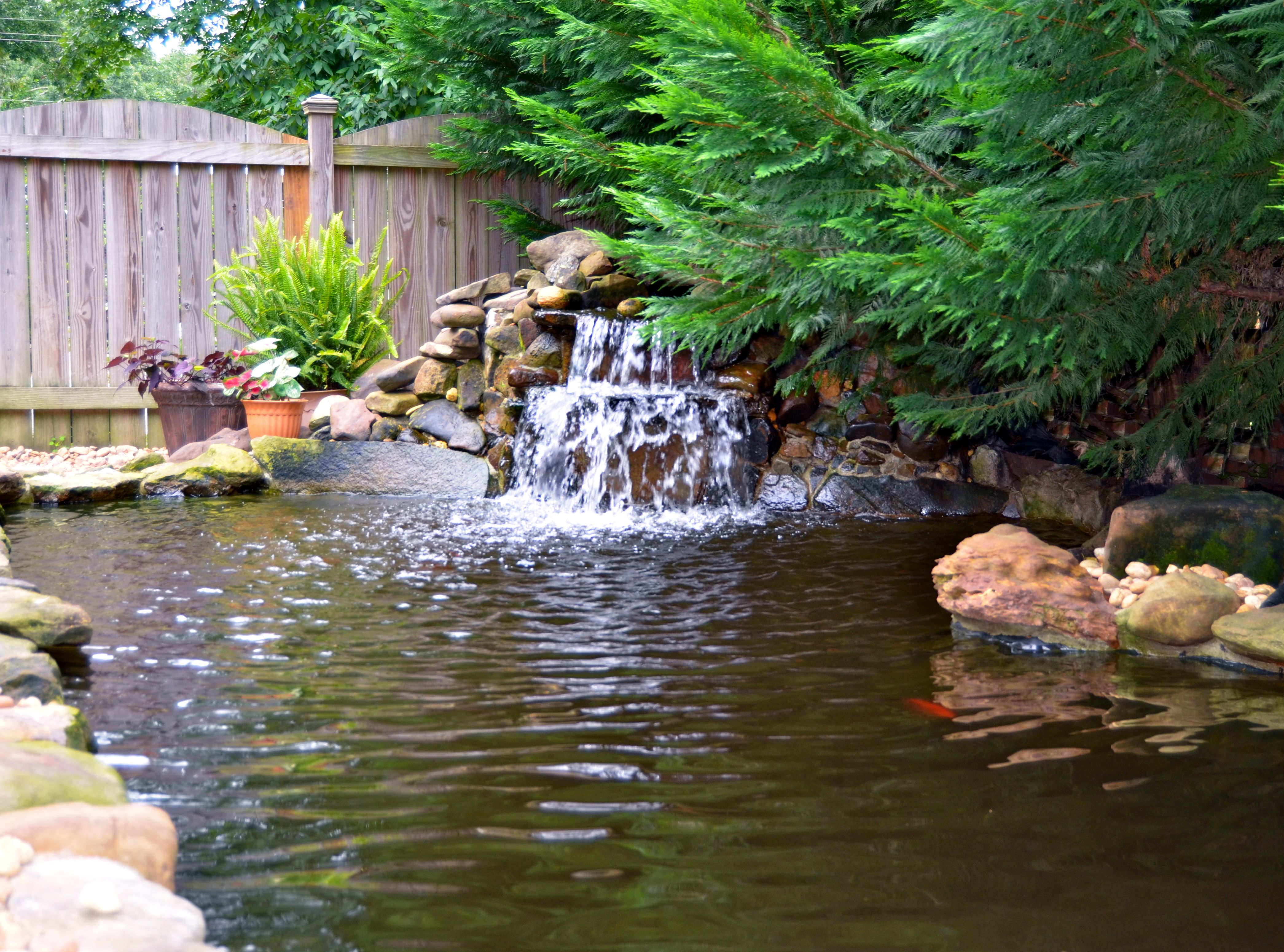 Home garden style  Backyard Koi and Goldfish Pond with Waterfall  Home Style