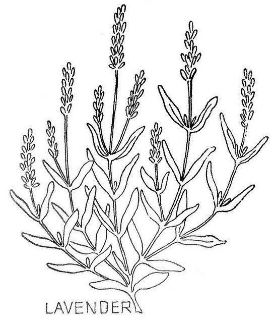 Wbherb5 Lavender Embroidery And Leaves