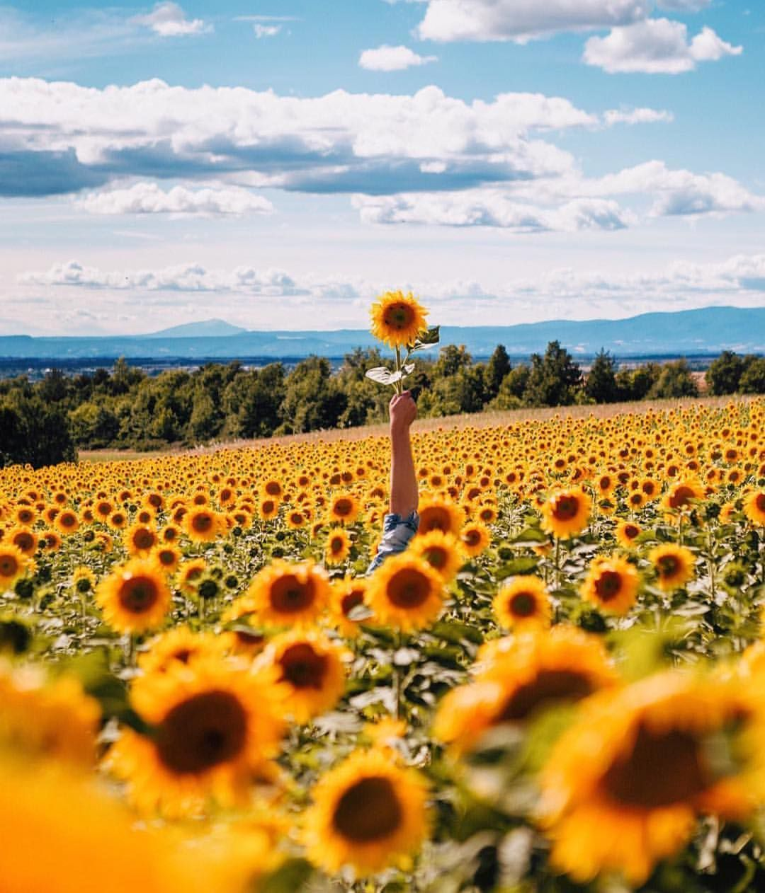 29 9k Likes 277 Comments Ootd Magazine Ootdmagazine On Instagram Tag Someone You W Sunflower Pictures Sunflower Photography Sunflower Field Photography
