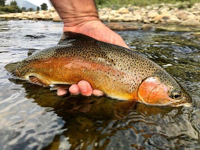 Pin On Hunting And Fishing