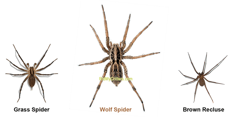 ce12ac8bfcd394c4fd1e556dbae807fb - How To Get Rid Of Wolf Spiders In The Basement