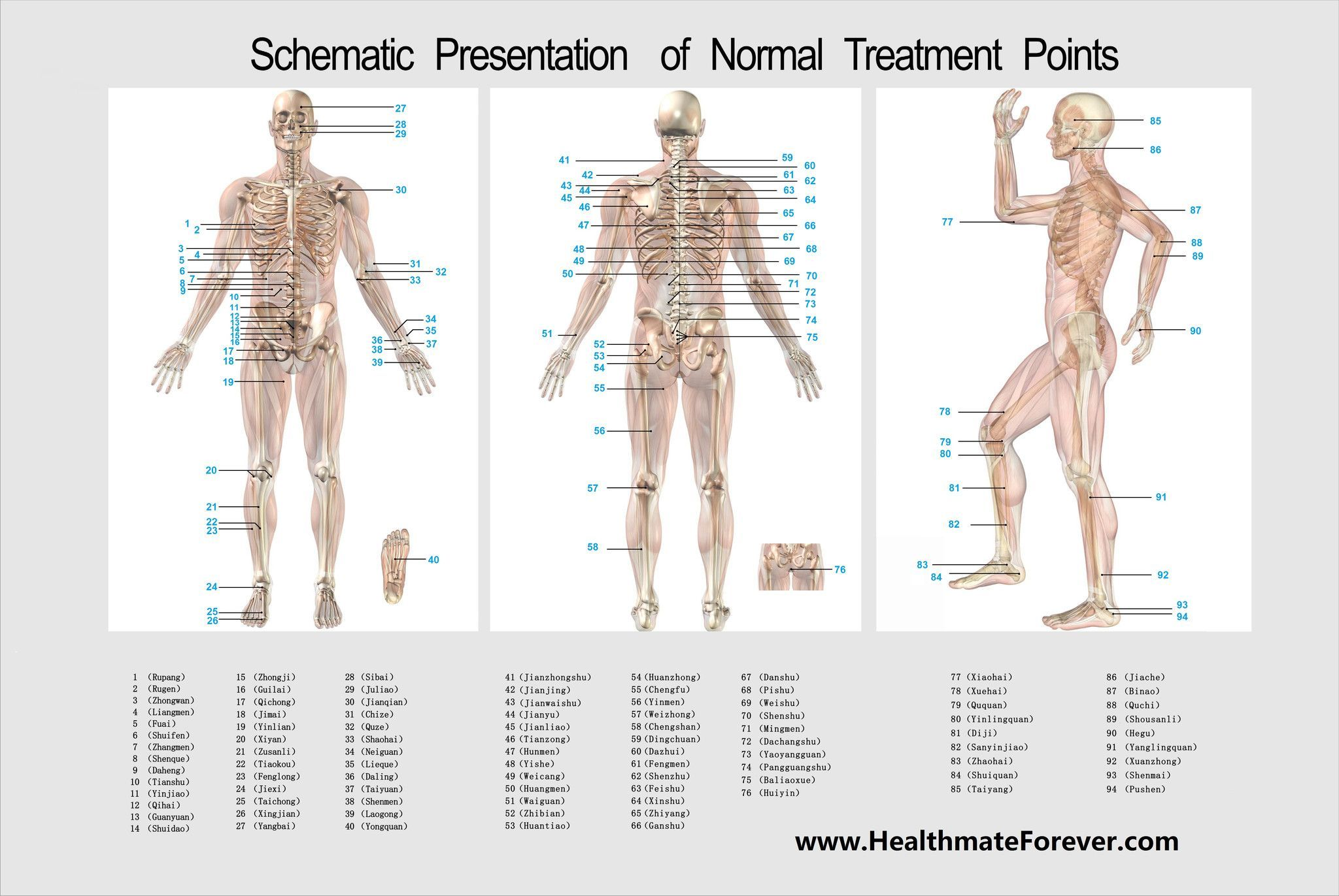 Healthmateforever Acupunture Chart Healthmateforever International Llc Tens Units Electrical M Healthmateforever Electronic Pulse Massager Pulse Massager