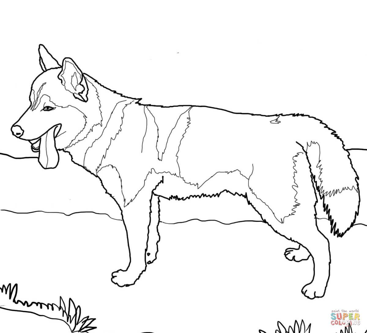 Siberian Husky Dog Super Coloring Dog Coloring Page Puppy