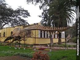 Excelente lugar para conocer parte de la historia natural de territorio peruano. no solo se destaca por sus grandes mamiferos acuaticos, si no tambien por grandes mamiferos terrestres. tiene muchas sorpresas!