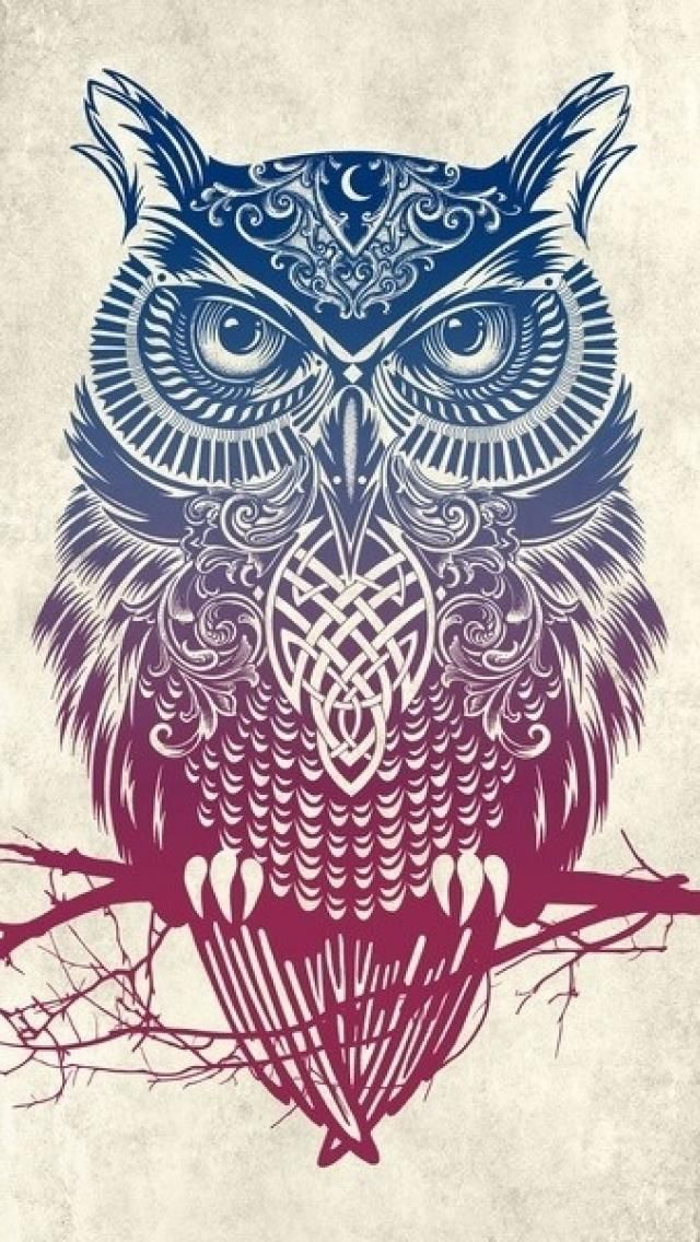 Best HD Walls Of Cute Owl Quality Wallpapers