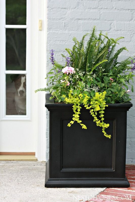 Front Porch Curb Appeal Home Decor Front Door Planters