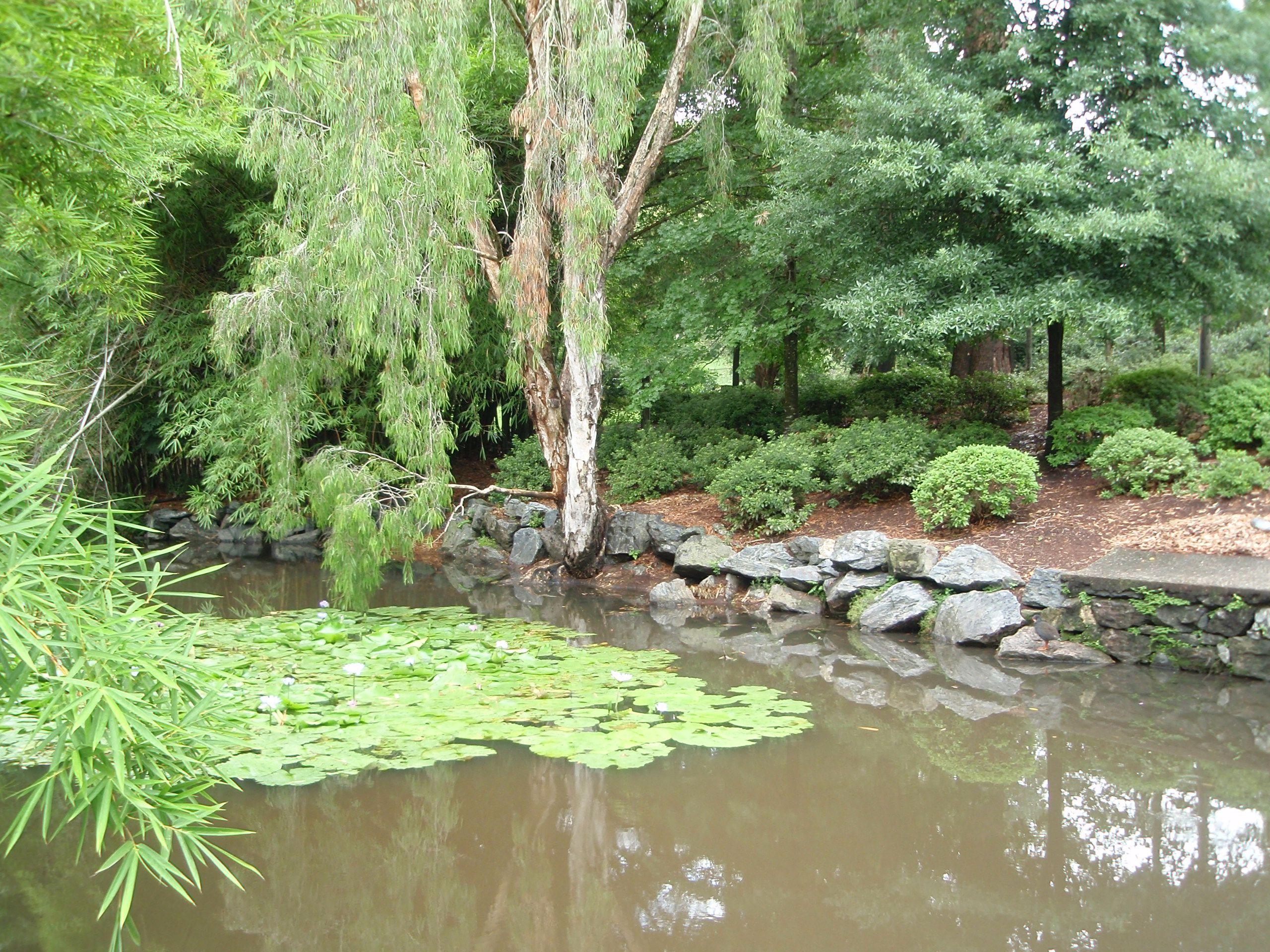 Mt. Cootha Botanical Gardens, Brisbane Australia ...