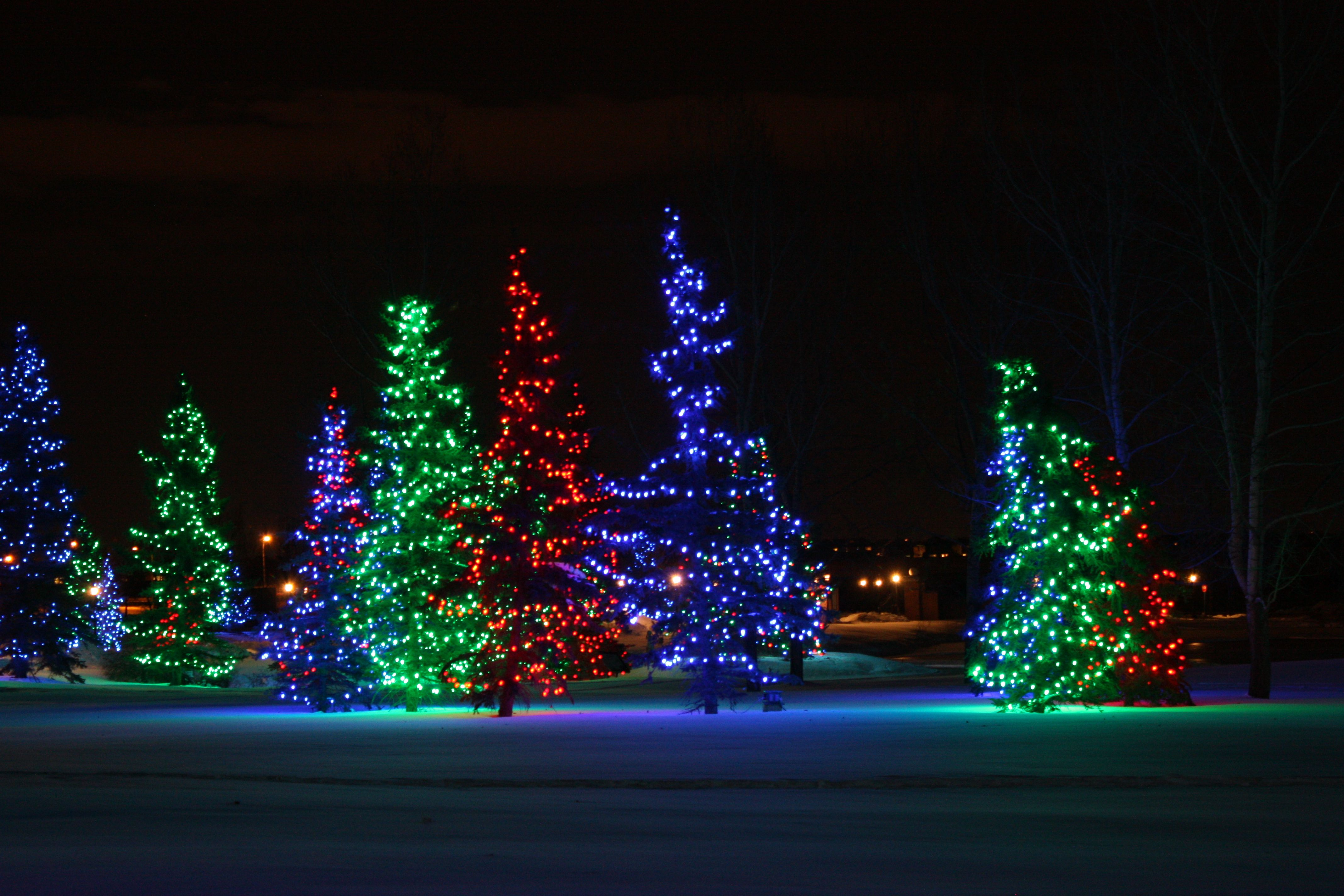 Holiday Lights At Spruce Meadows