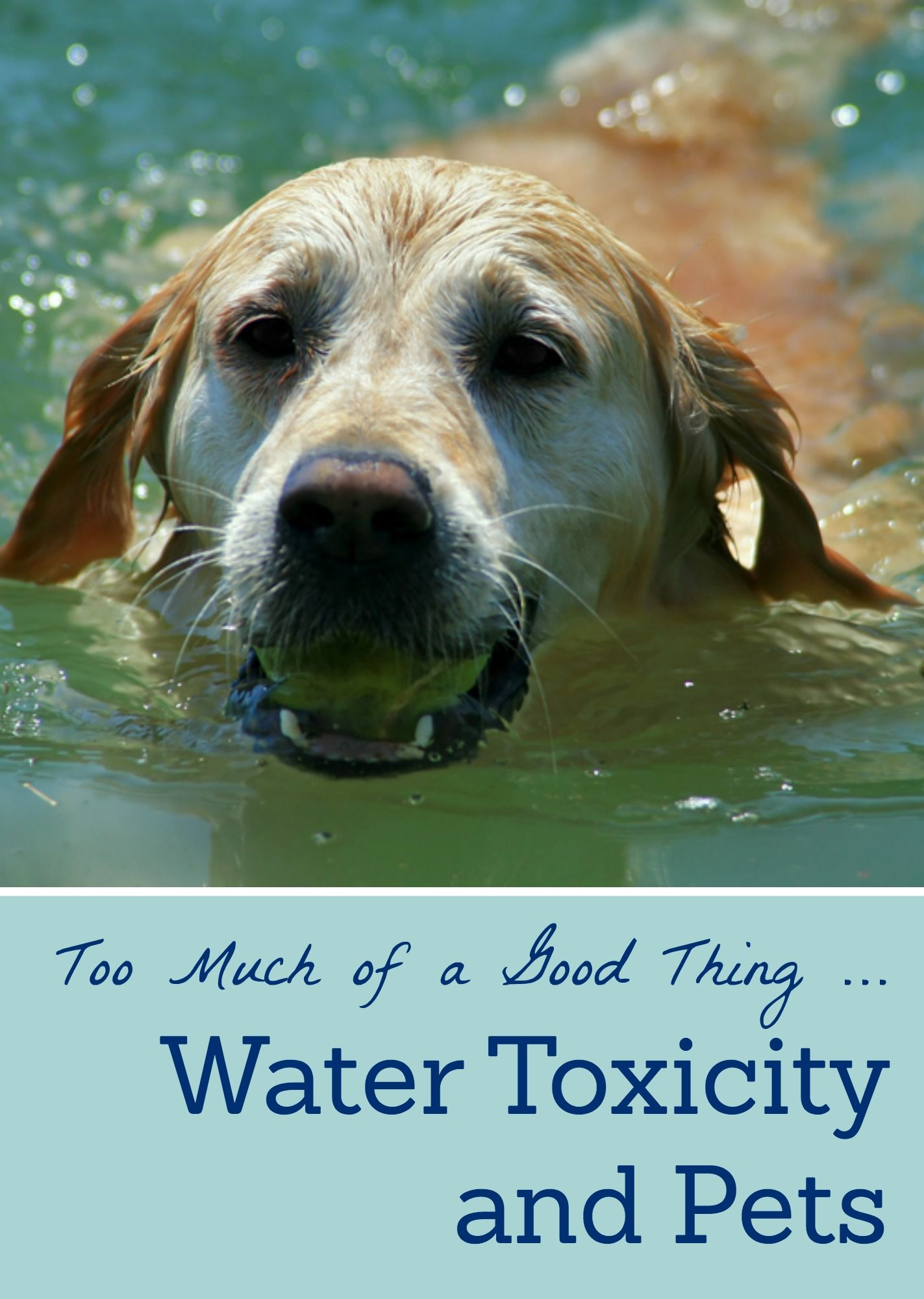 Did You Know That Too Much Water Can Cause Problems Other Than Drowning For Your Pet With Images Pets Small Pets Veterinary Hospital