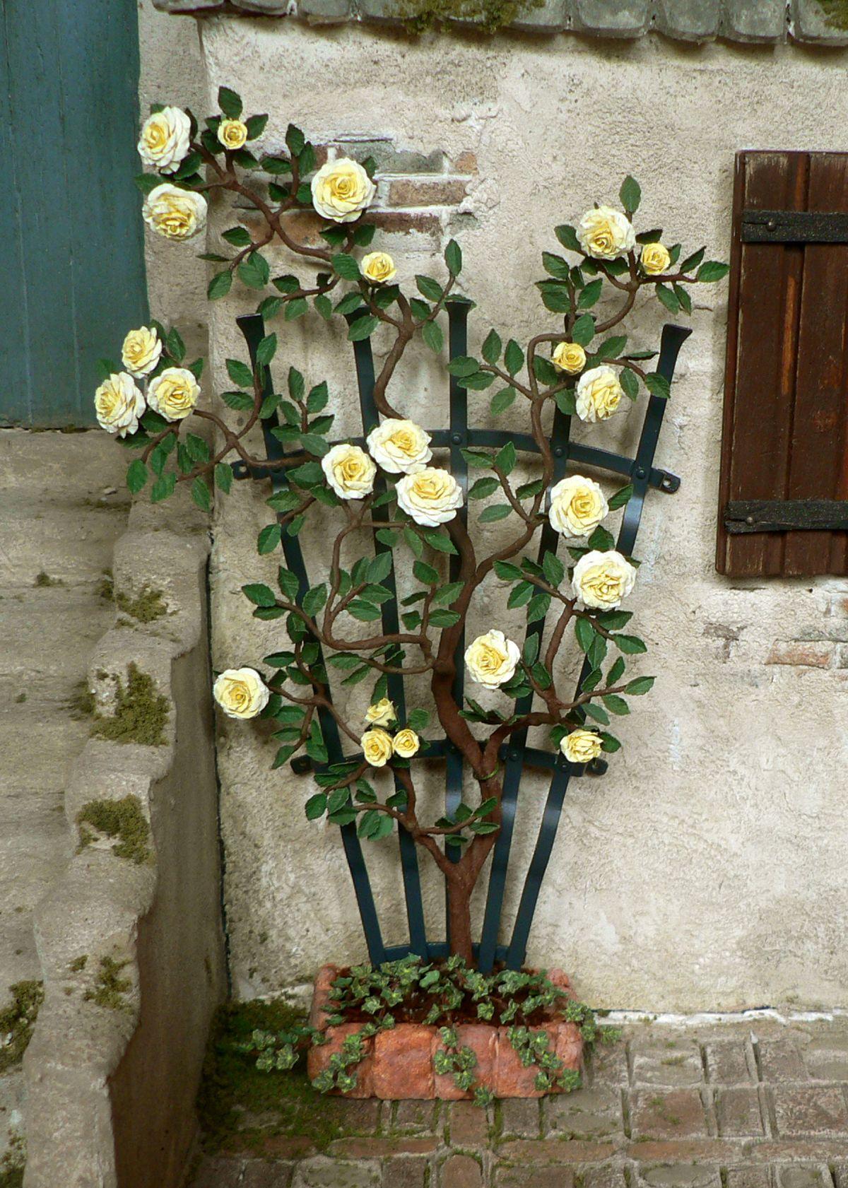 Yellow rose at a fan-shaped trellis
