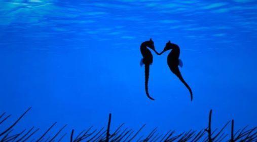 Sea Horse Love — https://www.facebook.com/AmazingFactsandNature1