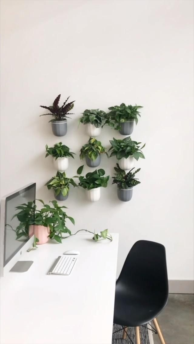 Office Makeover with Plants