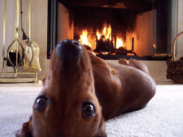 fireplace doxie
