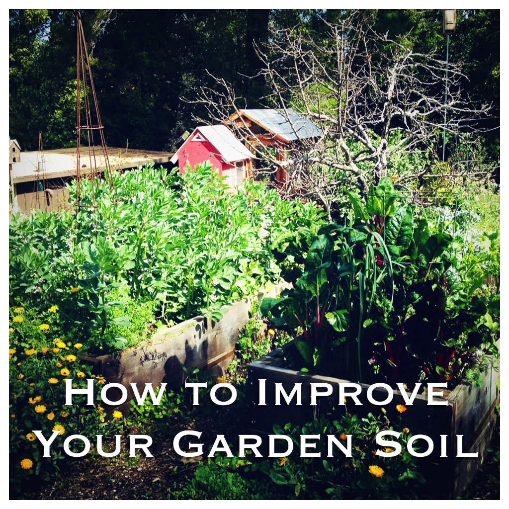 4 Ways to Improve the Quality of Your Garden Soil - Before You Plant!
