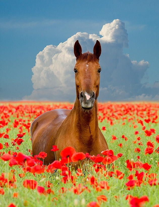 Colorful Scenerybeautiful Horse