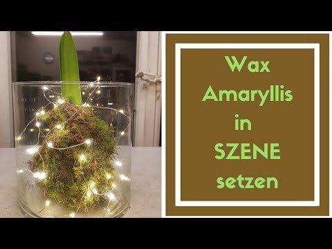 DIY Amaryllis Deko Idee - WAX-Amaryllis im Glas - Weihnachtsdeko - YouTube #amaryllisdeko