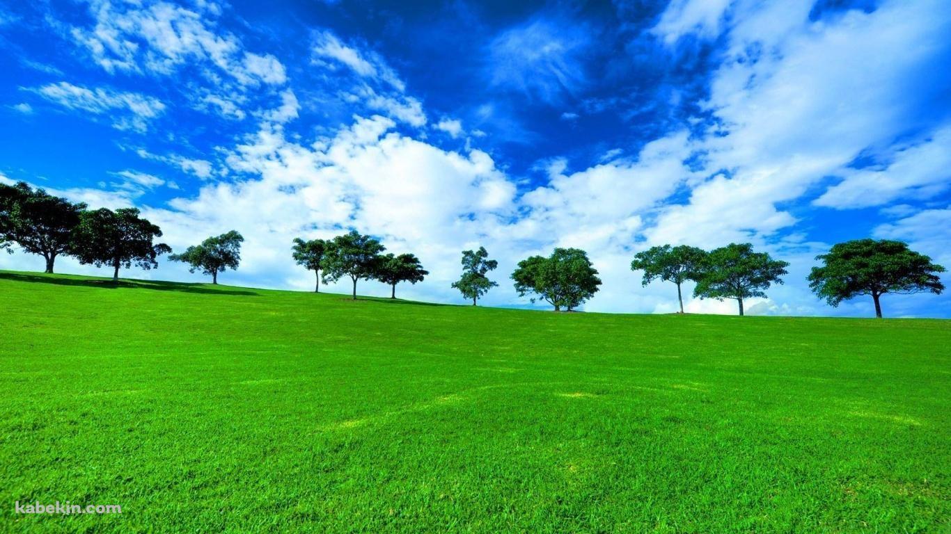 絶景 緑の草原と青い空 1366 X 768 の壁紙 壁紙キングダム Pc デスクトップ版 風景の壁紙 草原 木の写真