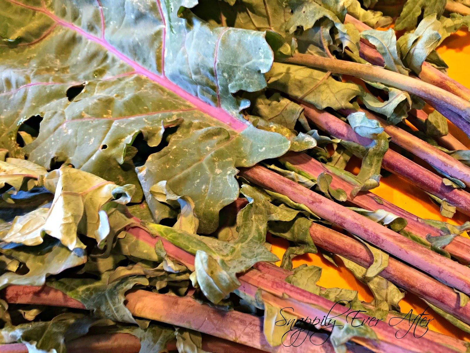 How to clean your kale ahh bugs kale csa box cleaning