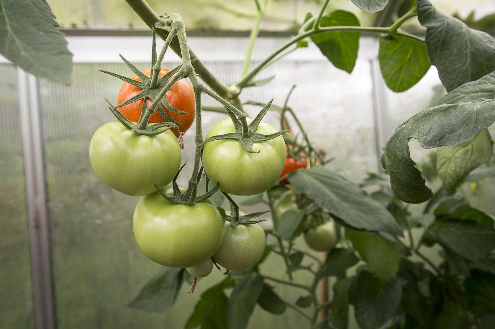 Quels Legumes Cultiver Dans Une Serre En Hiver Cultiver