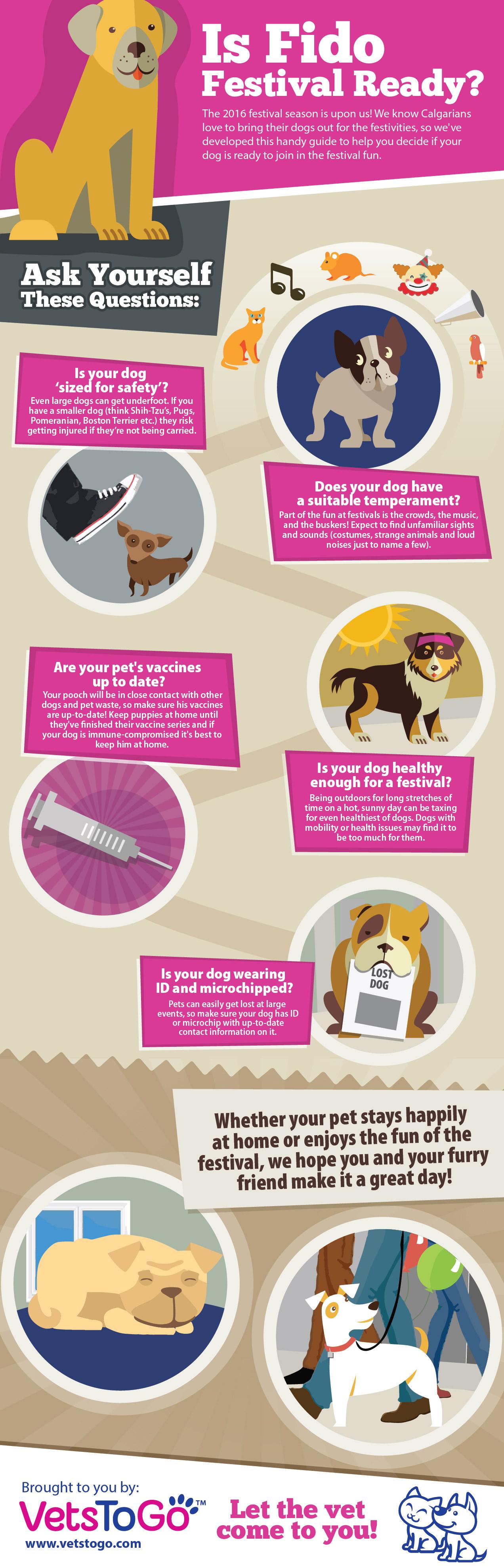 pet safety at festivals Dogs, Pets, Dog wear