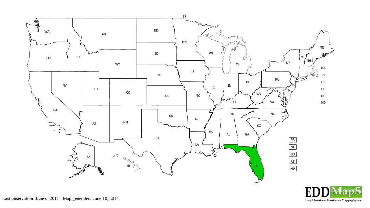 Acrochordus Javanicus Introduced To Florida Snakes Diagram Snake Filing A