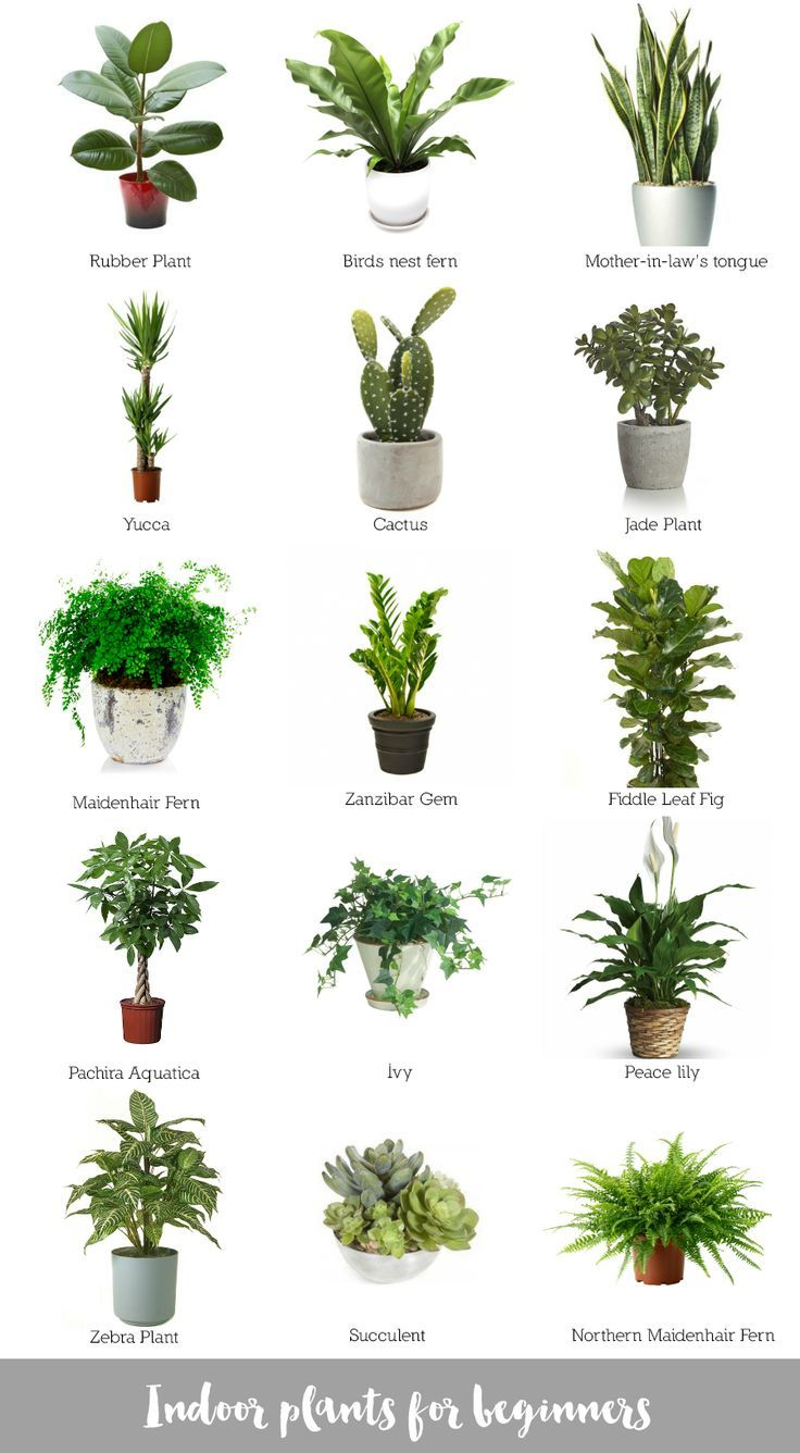 Indoor Plants For Beginners Plants Inside Plants Indoor Plants