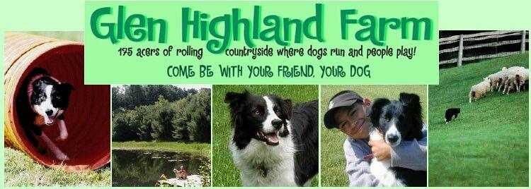 Dedicated border collie sanctyary & farm Glen Highland