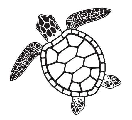 Sea Turtle Stock Vector Illustration Turtle Sketch Turtle Drawing Sea Turtle Drawing