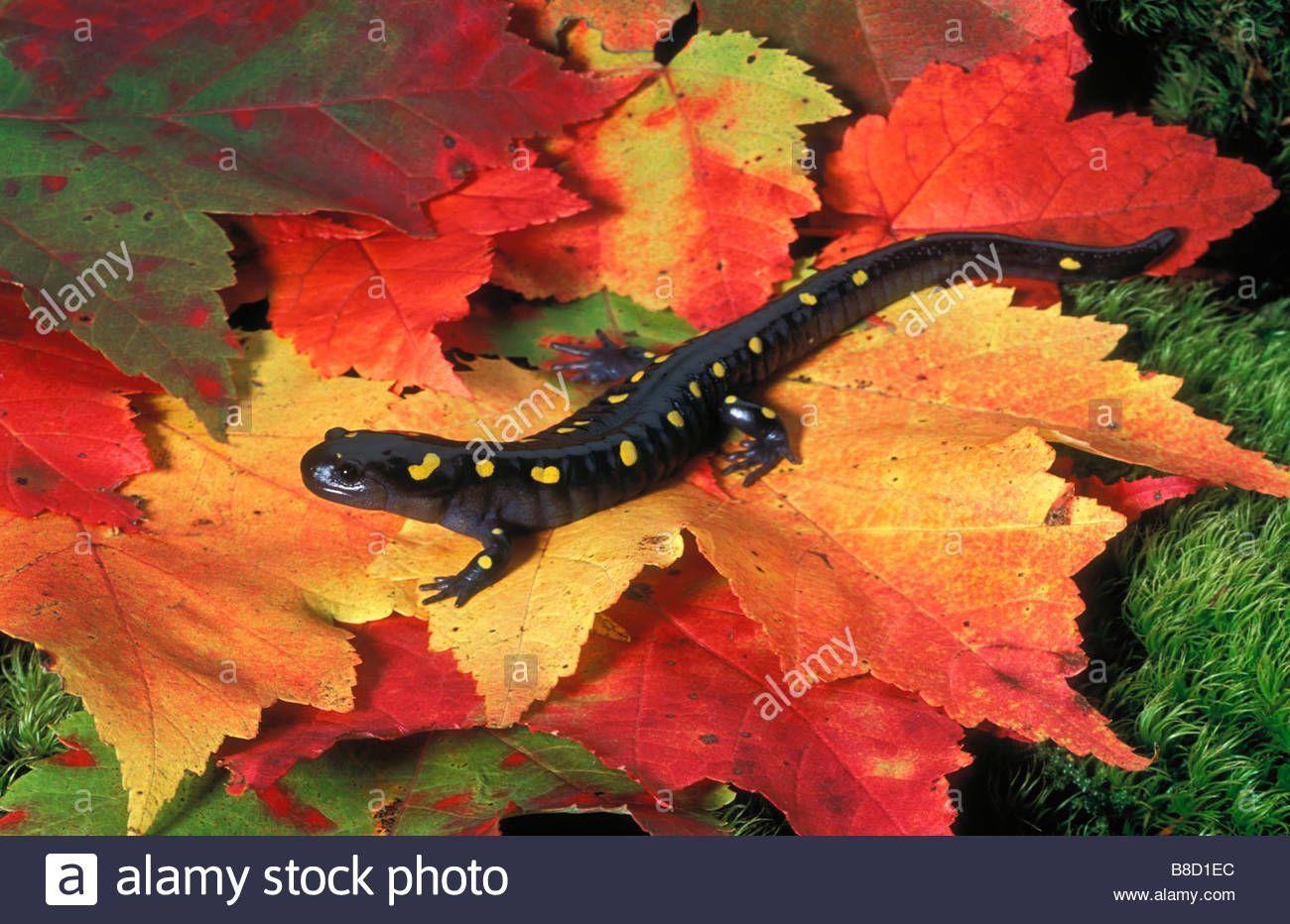 Scorpion Scorpion, Animals, Ticks