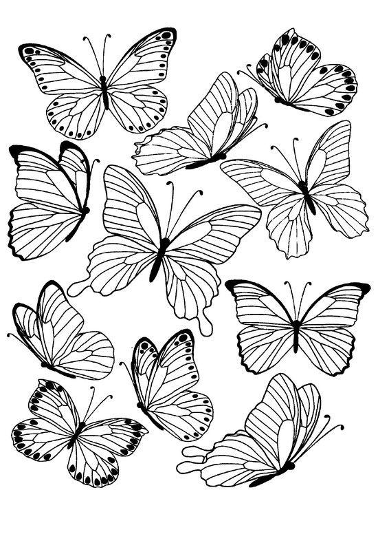 Butterflies 1 Butterfly Drawing Butterfly Tattoo Stencil Flower Drawing