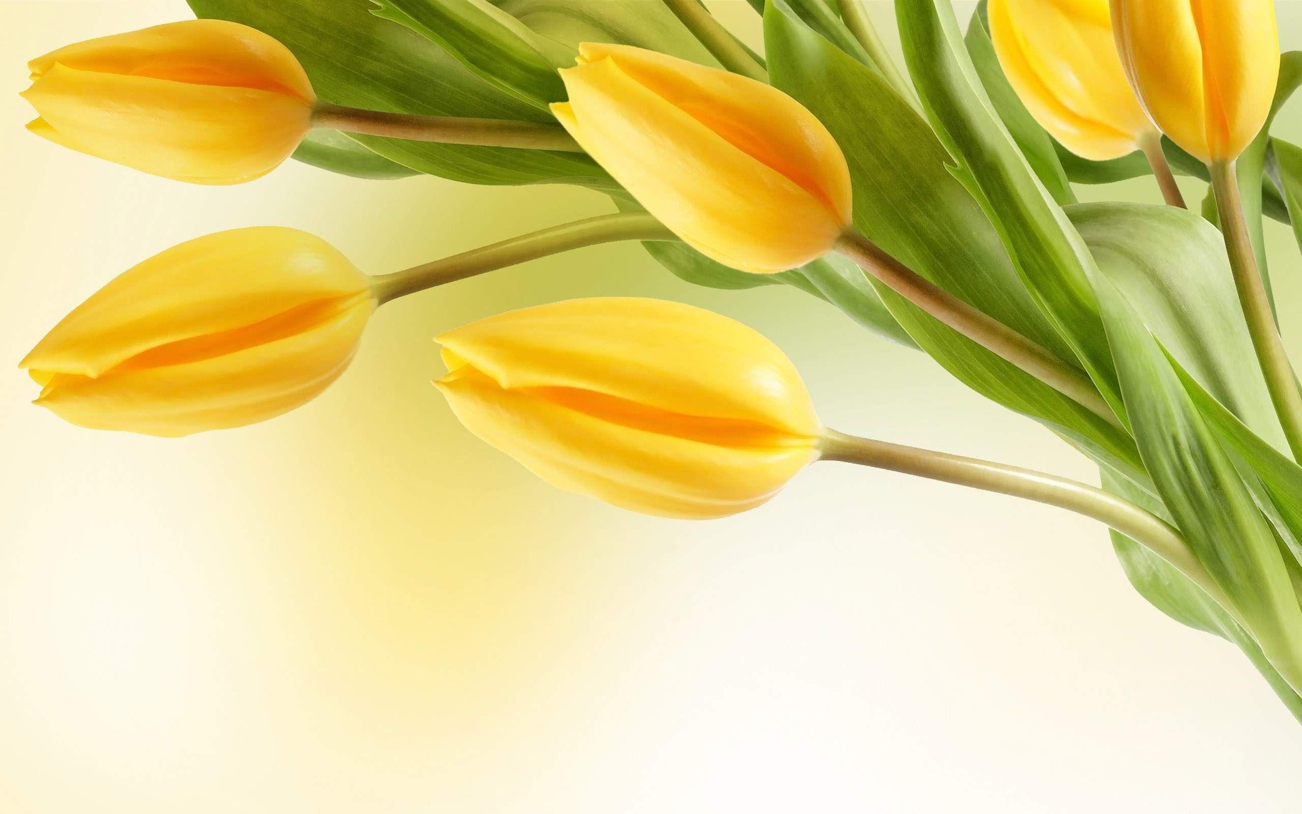 Hd Yellow Flower Wallpaper Flower Wallpaper Yellow Flower Wallpaper Yellow Tulips