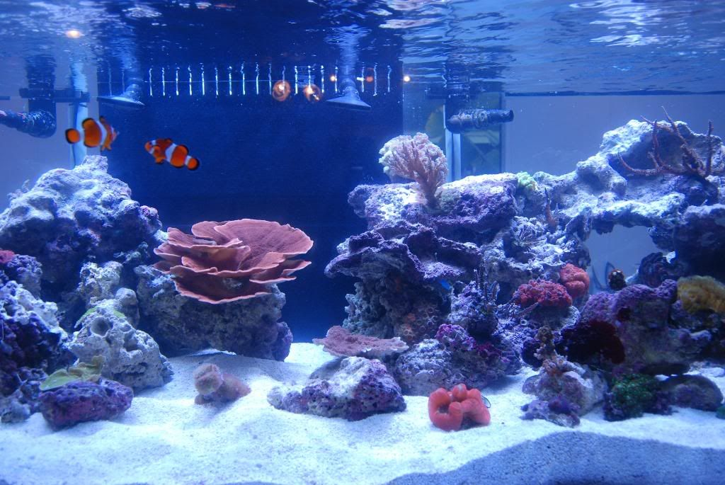 Aquascaping Show Your Skills Page 6 Reef Central Online
