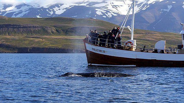 Fast Track travels to Iceland where whales pull in the crowds - not just for those wanting to go whale watching - but for those wanting to try whale meat too.