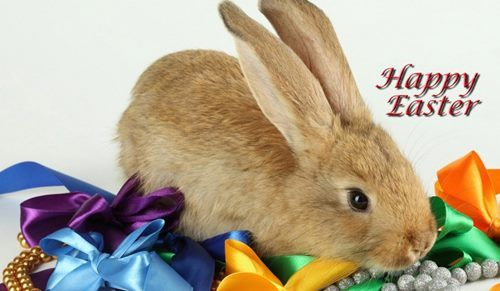 Easter Bunny Happy Wallpaper Hd Rabbit Pictures Desktop Wallpapers Holidays Events Greeting