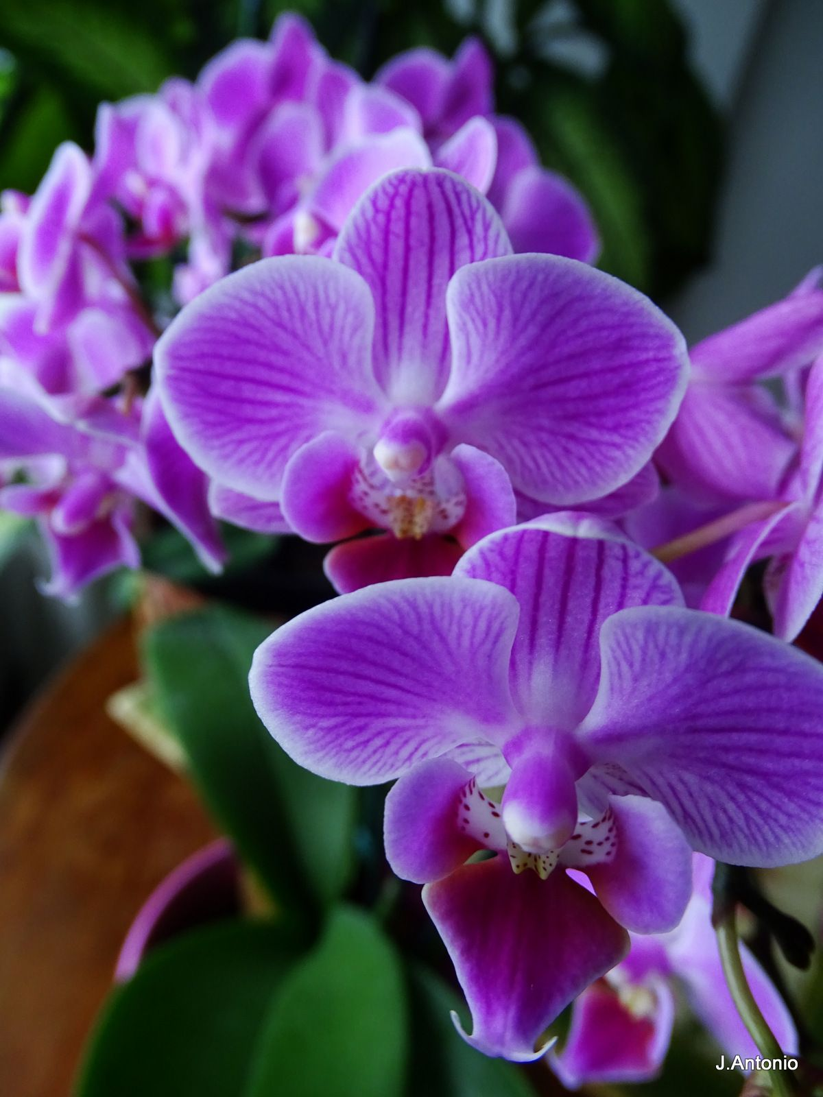 Lilac Orchid Orquidea Lilas Lilac Means Spirituality And Intuition Therefore A Metaphysical Color It Is The Color Of Alc Cosmic Energy Lilac Color Orchids