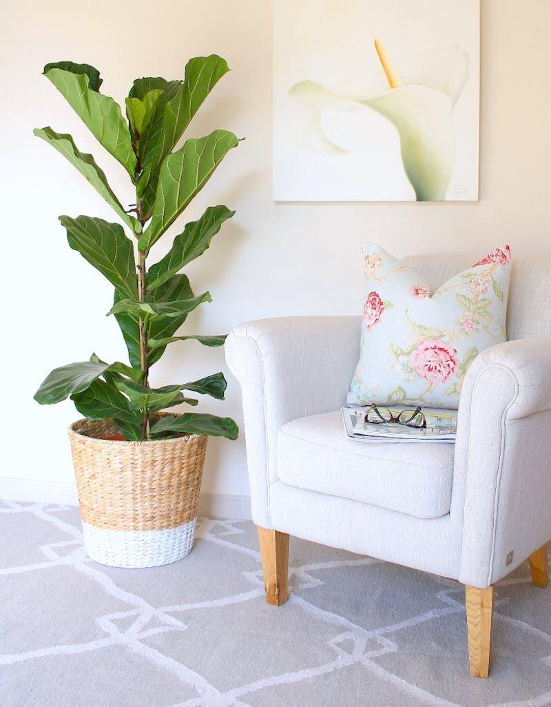 Ikea Hacks For Plants Pots Plant Stands Terrariums
