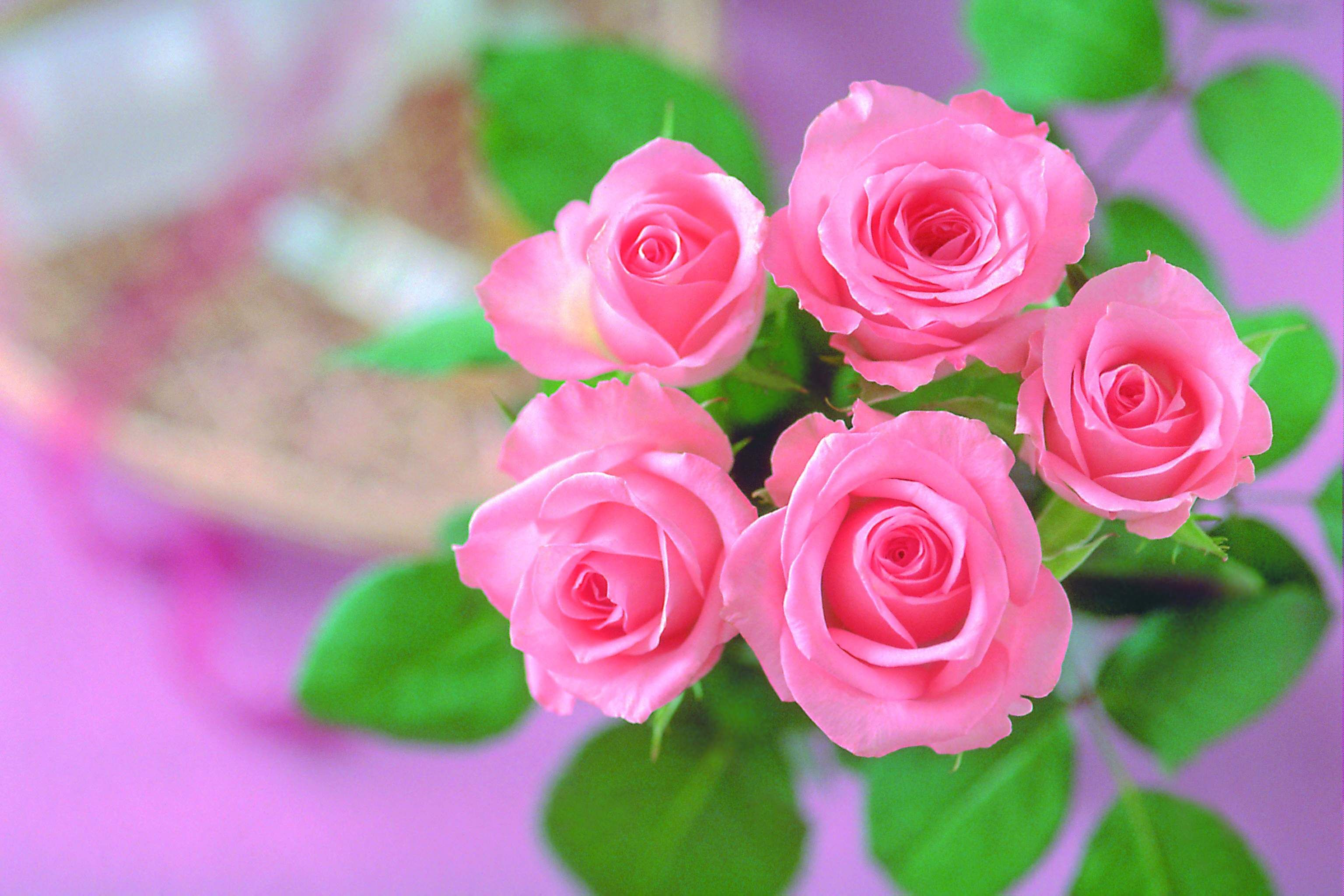 Rose Wallpaper Hd Tumblr For Walls For Mobile Phone Widescreen For Desktop Full Size Dwonload 2013 P Rose Flower Wallpaper Rose Flower Quotes Pink Rose Flower